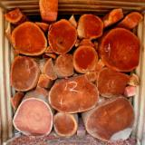Tropical Logs importers and buyers - Need to import ROSEWOOD LOGS