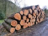 Softwood  Logs For Sale - Radiata Pine logs from Spain and Chile