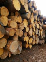 Softwood  Logs -  Logs without bark, spruce, fir