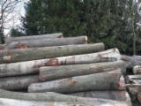 Looking for european red oak logs paying best prices!