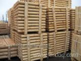 Find best timber supplies on Fordaq - MASSIV-DREV LLC - Pine Poles, diameter 5-20 cm