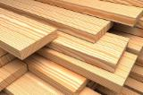 Softwood Logs importers and buyers - Need to Import Radiata Pine Logs