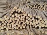 Yumuşak Ahşap  Tomruk Talepleri - Kerestelik Tomruklar, Çam  - Redwood