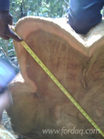 25---cm-Teak-Saw-Logs