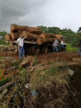 Hardwood  Logs - We have hardwoods