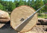 Oak  Hardwood Logs - Oak and Birch Logs Available for Sale