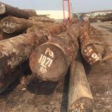 China Tropical Logs -  Purchasing Cedar from Africa