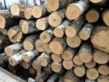 Thailand Hardwood Logs - Grade A, Birch saw logs from Russia and Estonia