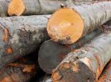 Hardwood  Logs - 40+ cm Beech (Europe) Saw Logs in Poland