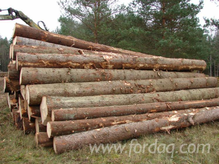 Sylvestris pine saw logs for Pine tree timber