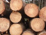 Softwood Logs for sale. Wholesale Softwood Logs exporters - Radiata Pine Round Logs For Sale