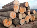 Softwood Logs for sale. Wholesale Softwood Logs exporters - European Spruce Round wood Logs Available