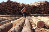 Nadelrundholz Zu Verkaufen - Schnittholzstämme, California Red Fir