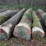 Schnittholzstämme, Esche