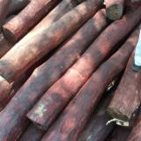 China Tropical Logs - Looking for pterocarpus logs in Africa