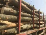 Hardwood  Logs For Sale - 10+ cm Cylindrical Trimmed Round Wood in Romania