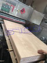 Plywood - Caobilla plywood for South America market