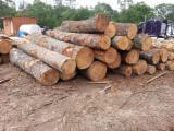 Hardwood  Logs - SeLL TEAK Logs