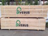 Sawn Softwood Timber  - 18 / 38 / 89 / 120 / 140 mm Kiln Dry (KD) Pine (Pinus Sylvestris) - Redwood in Lithuania