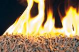 Firewood - Chips - Pellets Supplies - Eco Wood pellets according to certificat to ENA1 ore Din+