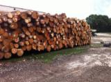 USA Softwood Logs - Yellow Pine Logs 10 inches