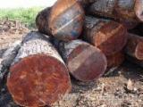 Tropical Wood  Logs - Need to import Acajou d'afrique