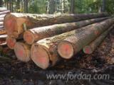Softwood  Logs For Sale - Douglas Fir  40+ cm charpente Saw Logs France