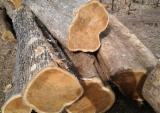 Forêts Et Grumes - Vend Grumes De Sciage Teak