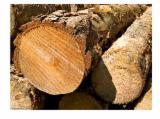 Tropical Wood  Logs Demands - Demand for Kosso logs
