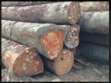 Tropical Logs importers and buyers - Buying Tali logs from Africa