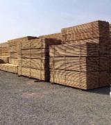 Cherestea rasinoase Brad de vanzare - Depozit Cherestea Rasinoase Oradea - Molid / Brad - 680+ lei/m3, negociabil