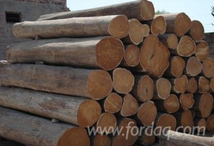 Teak Wood Logs From Vietnam