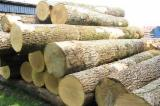 null - Importing White Ash Saw Logs 40+ cm