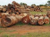 Tropical Logs Suppliers and Buyers - Importing Tali round wood from Cameroon
