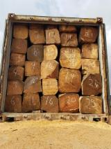 Tropical Logs Suppliers and Buyers - Importing Padouk square logs
