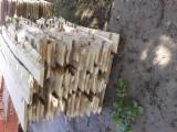 Laubschnittholz, Besäumtes Holz, Hobelware  Zu Verkaufen Kroatien - Bretter, Dielen, Pappel, I214
