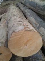Hardwood Logs importers and buyers - Need to Import Beech Logs