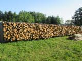 Northern White Cedar Softwood Logs - Northern White Cedar 4 cm no-1 Construction Round Beams from Canada