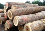 Hardwood Logs importers and buyers - Importing Poplar Logs