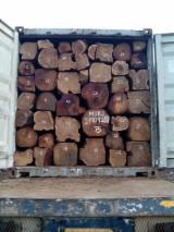 Teak logs OFFER