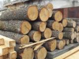 Hardwood Logs importers and buyers - Importing Round ASH Logs/White Ash Europe
