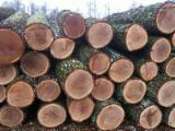 Hardwood Logs importers and buyers - Need to Import Round OAK Logs