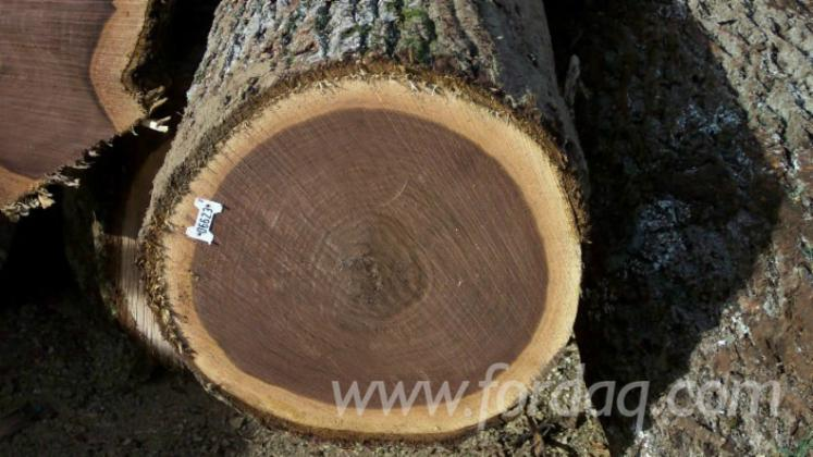Import European American Black Walnut Logs