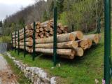 Achète Grumes Pour Bois De Chauffage  Hêtre, Bouleau, Chêne