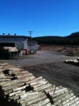 Nadelschnittholz, Besäumtes Holz Radiata Pine Pinus Radiata, Insignis - Bretter, Dielen, Radiata Pine