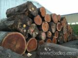 Tropical Wood  Logs - DABEMA saw logs for sale