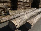 Laubholz  Blockware, Unbesäumtes Holz Zu Verkaufen Deutschland - Ahorn Schnittholz