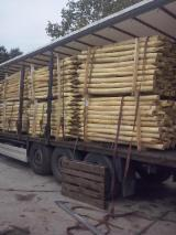 Acacia Hardwood Logs - Acacia (Robinia) barked, sanded, sapwood free poles for sale, production based on request