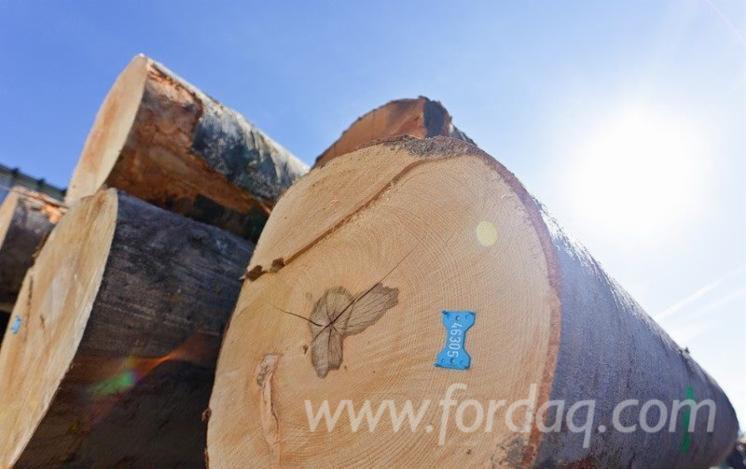 Beech-Logs