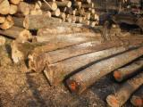 Hardwood  Logs - 300 mm Tilia  Industrial Logs from Romania